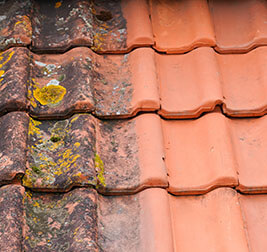Roof and House Cleaning